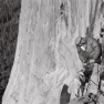 ROYAL ROBBINS ON EL CAPITAN'S NORTH AMERICAN WALL, 1964